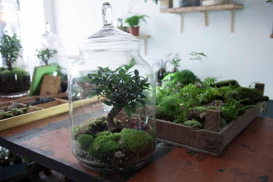 les jardins de verre de la green factory esperluette. Black Bedroom Furniture Sets. Home Design Ideas